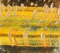 Free Tigers Eye Stock Image - 18427671