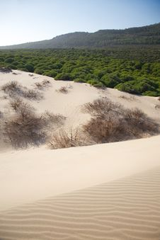 Free Sand On The Forest Royalty Free Stock Images - 18420159