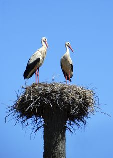 Free Two White Storks Royalty Free Stock Photography - 18420537