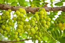 Free Thai Green Fruit. Stock Photos - 18421743