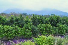 Flower Garden With Trees And Mountainous Backgroun Royalty Free Stock Photos