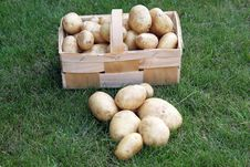 Free Potatoes Stock Images - 18426594