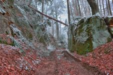 Free Forest In Winter Royalty Free Stock Photography - 18428567