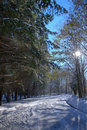 Free Forest Under Winter Stock Image - 18433561