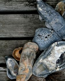 Free Seashells On Wood Deck Royalty Free Stock Images - 18430329