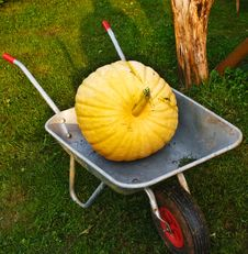 Free Ripe Pumpkins In The Garden Cart. Stock Photography - 18430872