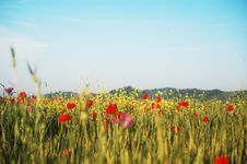 Free Wildflowers Meadow Royalty Free Stock Photography - 18431647