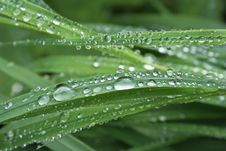 Free Water Drops On The Grass Royalty Free Stock Photos - 18432808