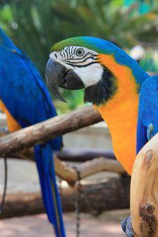 Free Macaw Portrait Stock Image - 18435831