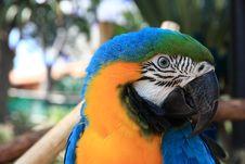 Free Macaw Headshot Stock Image - 18435891