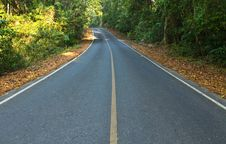 Road In The National Park Royalty Free Stock Photography