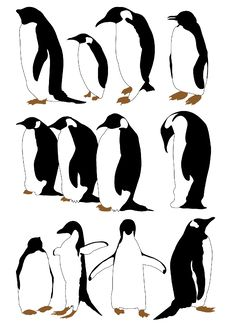 Free Penguin Royalty Free Stock Image - 18438546