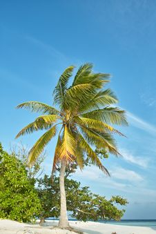Palm Tree And Ocean And Blue Sky Stock Photography