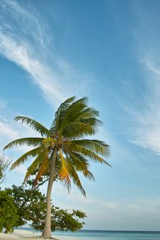 Palm Tree, White Sand Beach, Ocean And Blue Sky Stock Photos