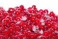 Free Berries   Currant  Frozen Stock Photos - 18440083