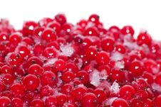 Free Berries   Currant  Frozen Stock Photos - 18440083