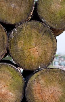 Free Cut Logs On Pile Royalty Free Stock Photos - 18440988