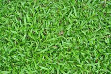 Free Grass Stock Image - 18441311