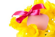 Free Daffodils With Label Stock Photo - 18441400