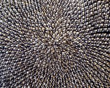 Free Close Up Of Sunflower Seeds Stock Photo - 18442190