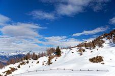 Free Graze Under Snow Stock Photos - 18443333