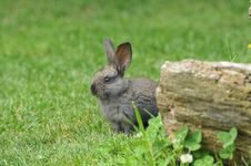 Free Rabbit Stock Photography - 18444352