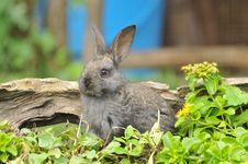 Free Rabbit Royalty Free Stock Photo - 18444795
