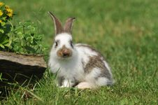 Free Rabbit Stock Photos - 18444923