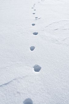 Free Footsteps In The Snow Royalty Free Stock Photo - 18445235