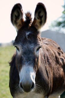 Free Donkey Stock Photography - 18448652