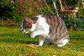 Free Cute Cat Enjoys The Garden Royalty Free Stock Photo - 18451055