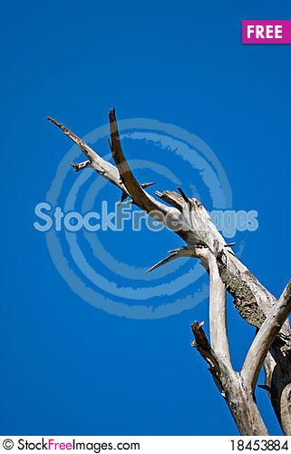 Free Dead Tree Stock Images - 18453884