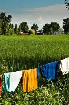 Hanging Drying Colorful Clothes In Rice Field Royalty Free Stock Photo
