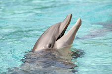 Dolphin Surfacing From Water Royalty Free Stock Images