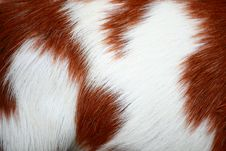 Free Goat Fur Background Royalty Free Stock Photo - 18453625