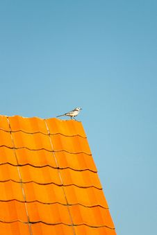Bird On The Roof Royalty Free Stock Photography