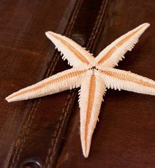 Free Starfish Stock Images - 18455374