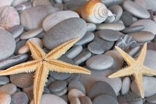 Free Starfish On Pebbles Stock Photography - 18455472