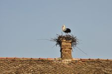 Free Stork In Nest Royalty Free Stock Image - 18455886