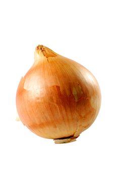 Onion Closeup Stock Photo