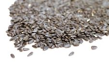 Free Sunflower Seeds Royalty Free Stock Image - 18457156