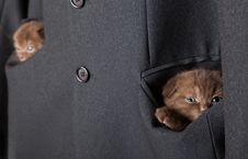 Free Kittens Are In A Jacket Pockets Stock Images - 18457994