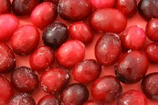 Free Cranberry Stock Images - 18458174