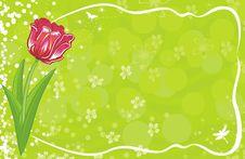 Free Tulip Stock Photo - 18458420