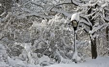 Free Snow Covered Street Lamp Stock Images - 18459024