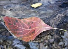 Free Autumn Leaf On Log Royalty Free Stock Photo - 18459175