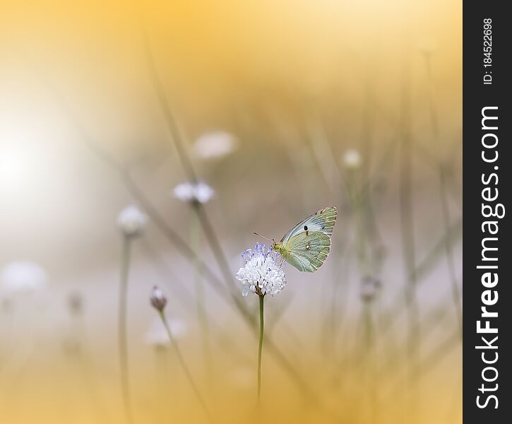 Beautiful Nature Background.Abstract Wallpaper.Celebration.Artistic Spring Flowers.Art Design.Golden Color.Summer, love.Butterfly.