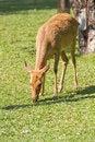 Free Deer Stock Photos - 18460293