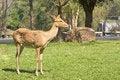 Free Deer Stock Photo - 18460340