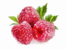 Free Raspberry - 3 Raspberries Stock Photography - 18460202